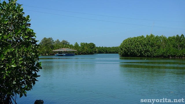 dawel-river-cruise-bangus-harvest