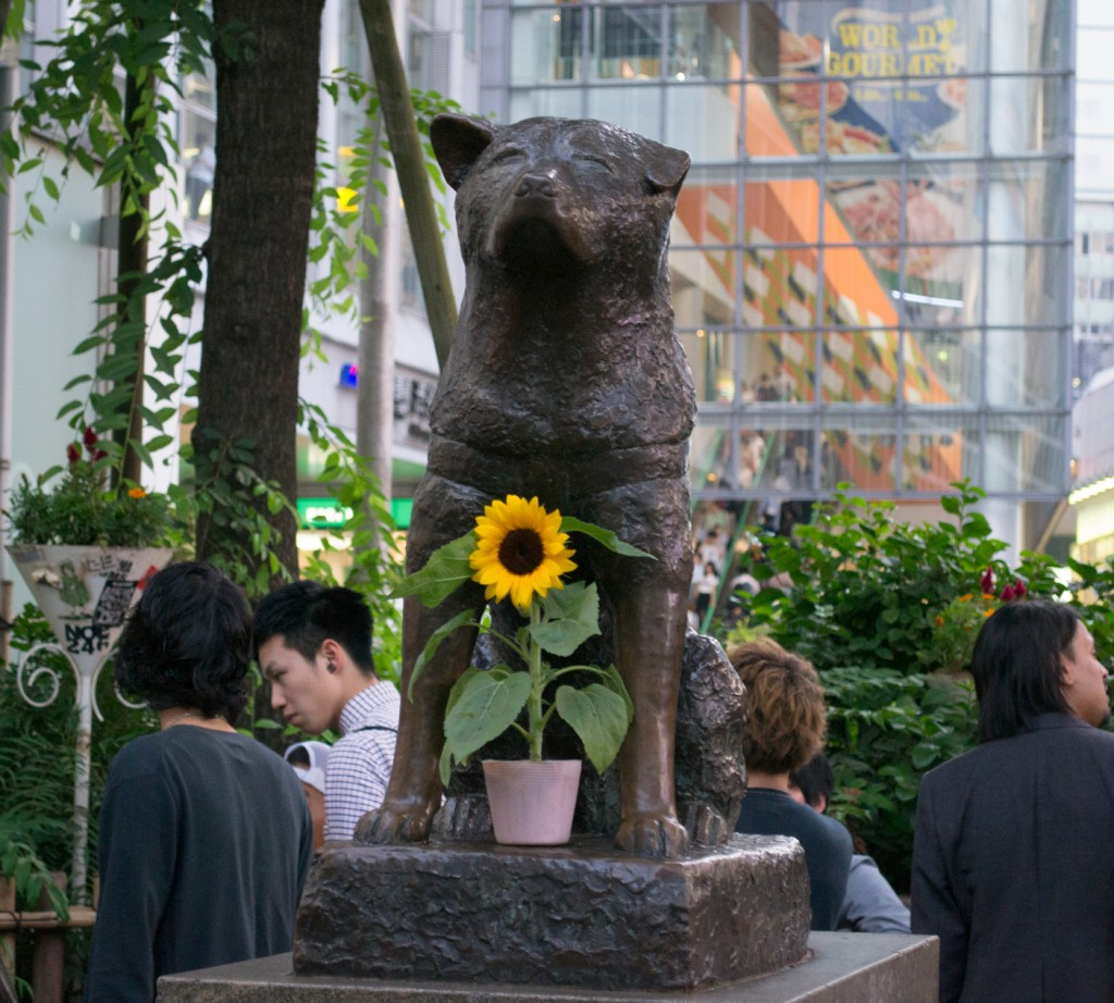 Hachiko - The Loyal Friend
